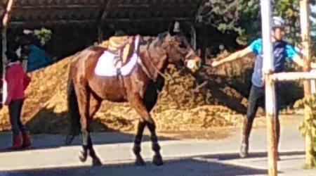 20181128_horse.jpg