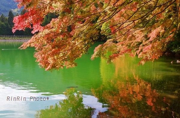 2018年10月南伊奈ヶ湖覆いかぶさるモミジ