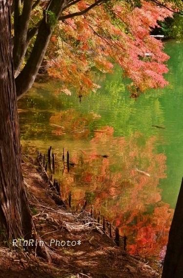 2018年10月南伊奈ヶ湖映り込みモミジ