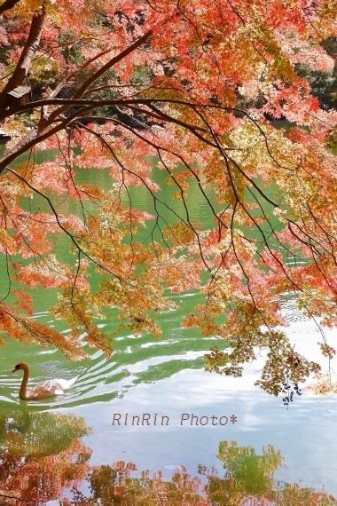 2018年10月南伊奈ヶ湖紅葉美と白鳥