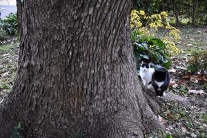 Junko and Jun The Cat