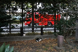 Deko The Cat and Fire Engine