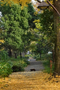Pong The Cat crossing the path