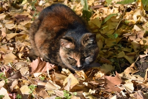 Pong The Cat on Fallen Leaves