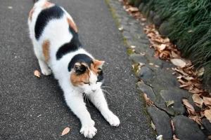 日比谷公園の三毛猫 greeting pose