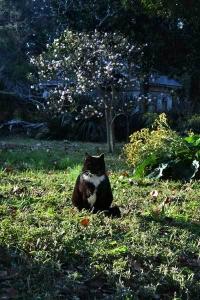 Jun The Cat