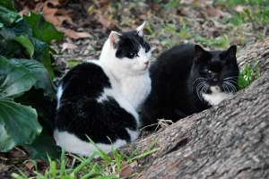 Junko and Jun The Cats
