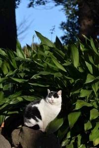 Junkp The Cat