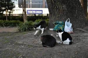 Tak, Mok, and Deko The Cats