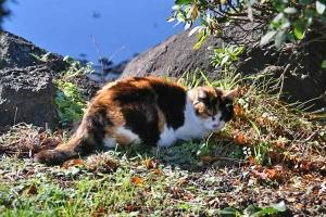 Mii The Cat