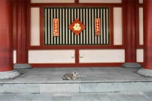 Singapore Cat, Chinese New Year