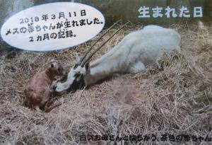 金沢動物初回8