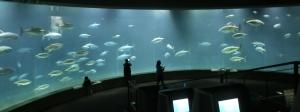 葛西水族園施設0-3