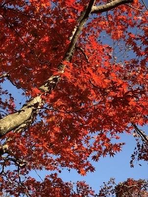 青空に映える紅葉