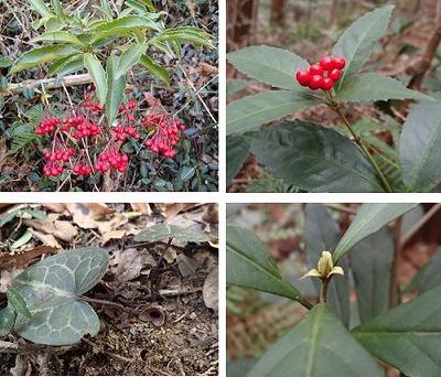 11植物4種