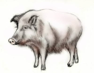 G-_記録保存_趣味_絵画作品_作品(動物編)_pig01のコピー