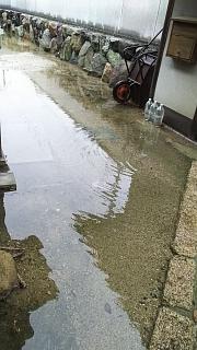 20180909雨(その2)