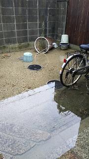 20180909雨(その4)