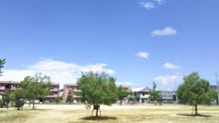 20180729台風一過(その5)