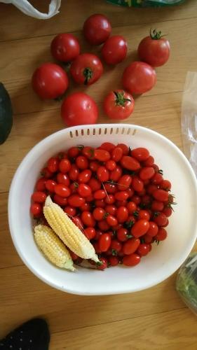トマト2018