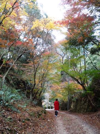 泉山磁石場和子さん14(2018-11-23)