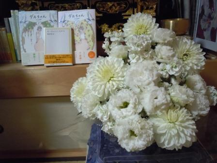 生花(白)とダルちゃん・えーえん1