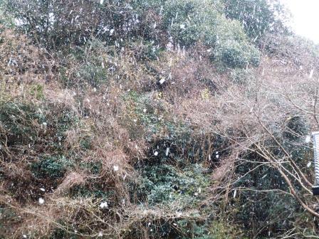 雪20(2018-12-28)
