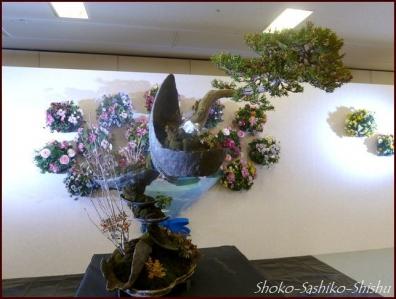 20190205 盆栽 4  花の展覧会