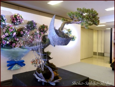 20190205 盆栽 6  花の展覧会