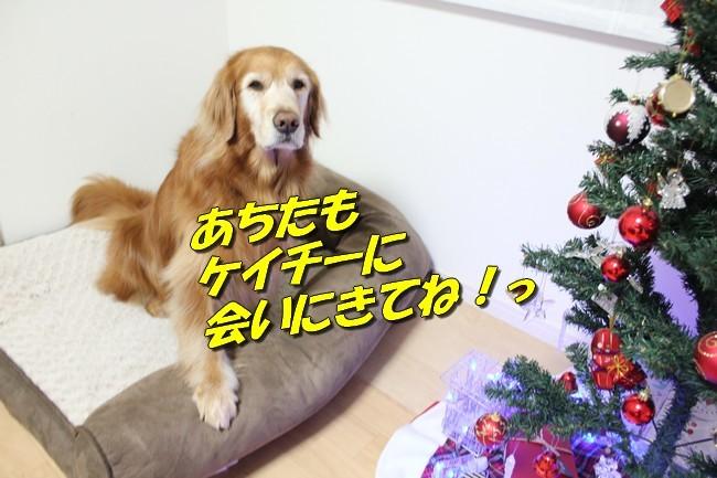 モモパパからのクリスマス 027