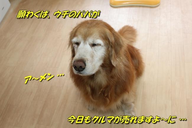 モモちゃんジャーキー 010