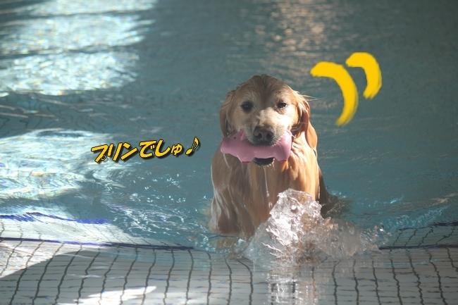 プリンとプールと表情 001