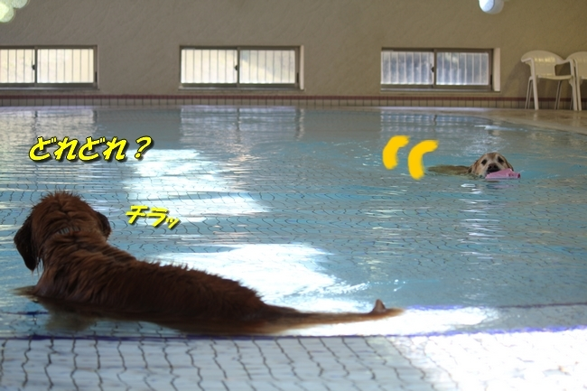 プリンとプールと表情 033