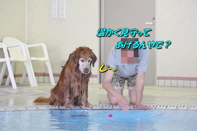 プリンとプールと表情 111