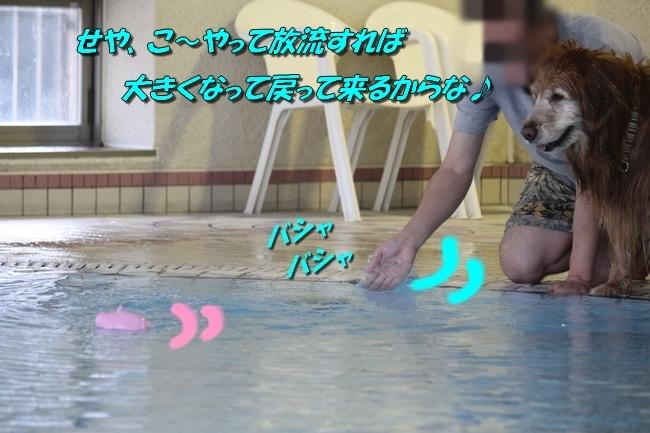 プリンとプールと表情 203