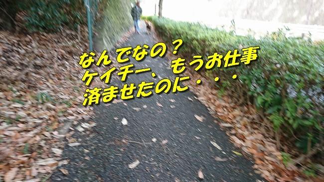 DSC_2133.jpg