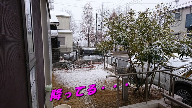 DSC_2144.jpg