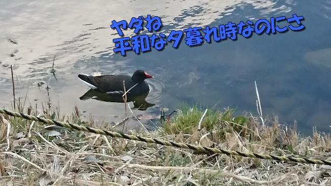 DSC_2288.jpg