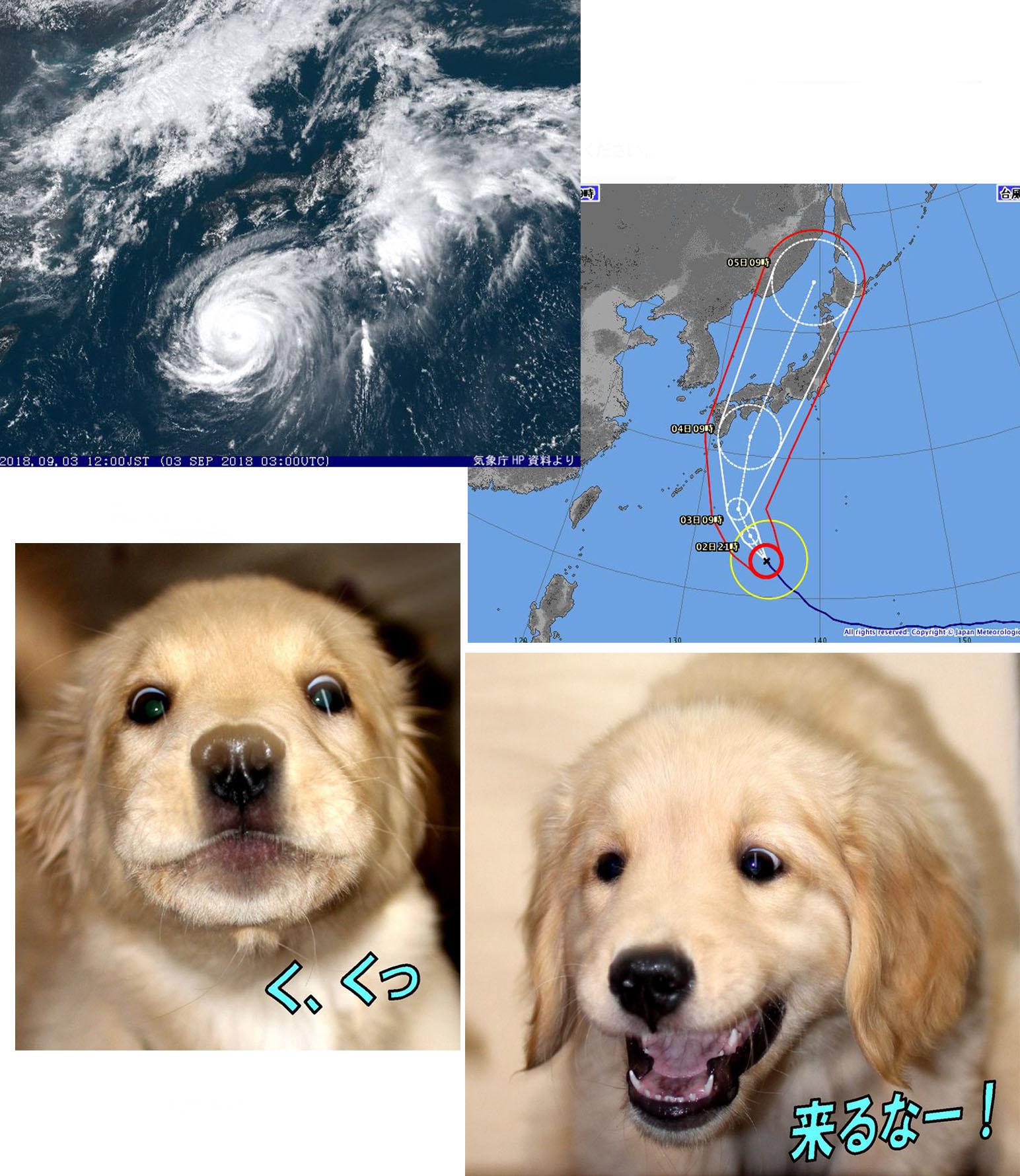 台風21号「く、来るな~」