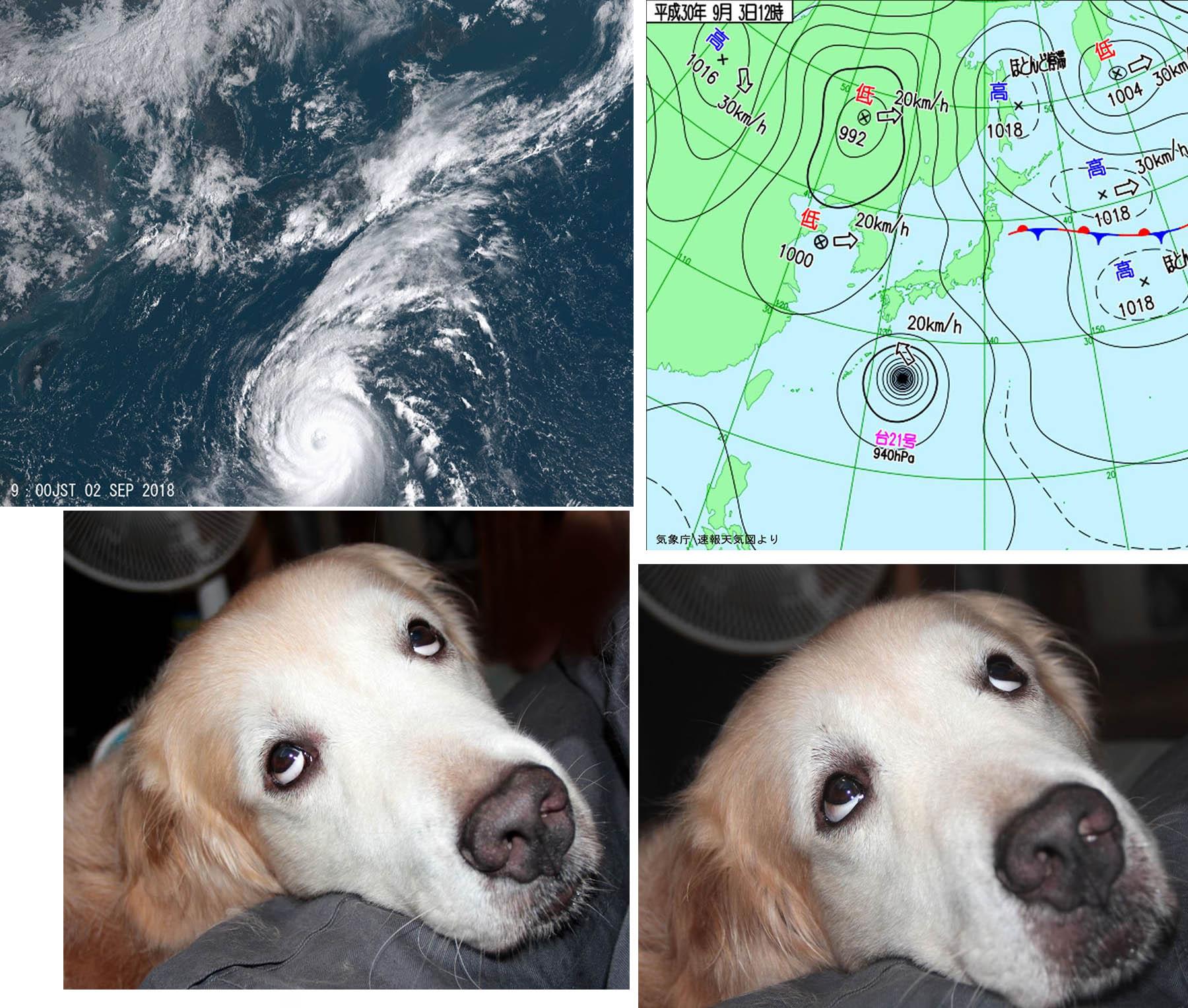 台風21号「やだな~」