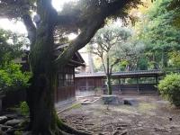 ねじれた樹(ヴォルテックス?)