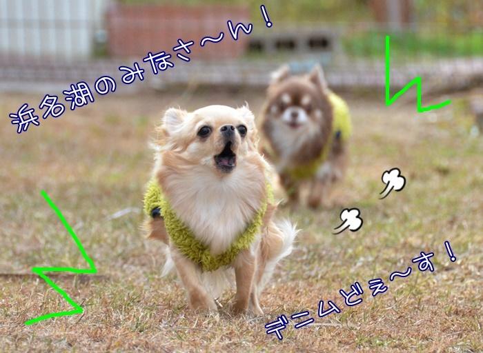 DSC_0143_20190130195910459.jpg