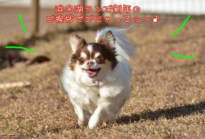 DSC_9983_201901102022281a1.jpg