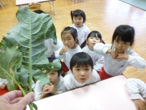 10-ブロッコリー葉っぱ