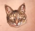 猫目before