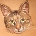 猫目after