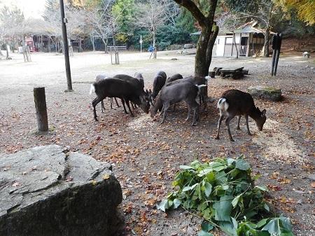 もみじ谷公園12-2