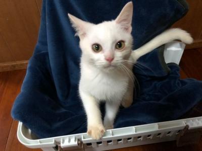 沖縄白猫しろくん_181120_0004