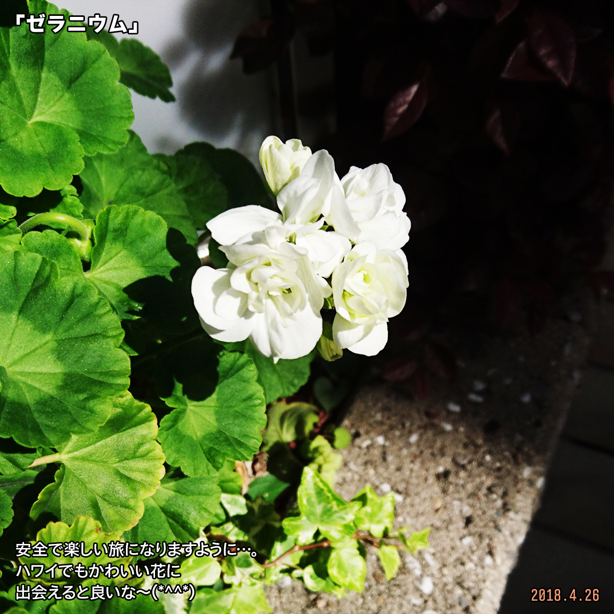 DSC_7146.jpg
