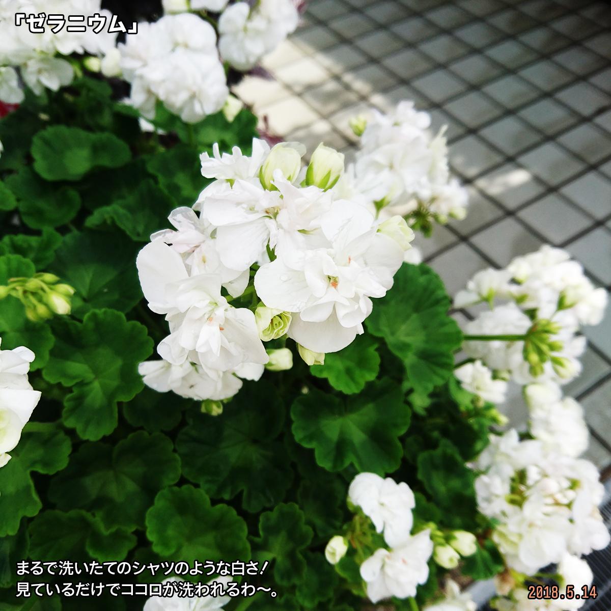 DSC_7293-1.jpg